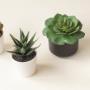 Plants & Composte