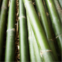 Sustainable & Bamboo Products